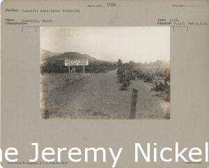 1916 Vineyard with sign